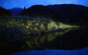 ნეონური ღამეები