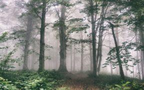 კოლხური ტყის შემქმნელი მარადმწვანე ხე-მცენარეები