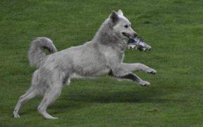 ძაღლი სტადიონზე შეიჭრა და თამაში გააჩერა