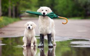 დარია თუ ავდარია - დავაკვირდეთ ცხოველებს