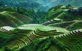 ბანაუს ბრინჯის ტერასები, ფილიპინები